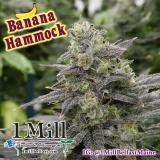 1 Mill Belfast - Banana Hammock